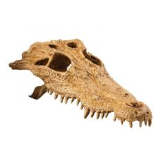 Exo Terra Crocodile Skull Large