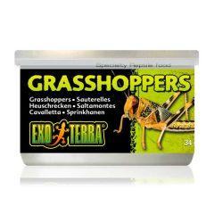 ExoTerra gresshopper 34g