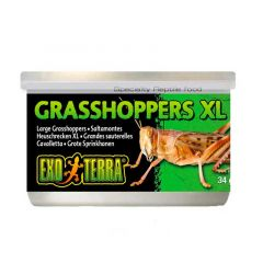 ExoTerra gresshopper XL 34g