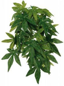 Silkeplante Abutilon 30 cm