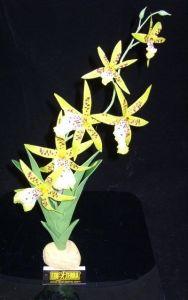 Spider orchid terrarieplante