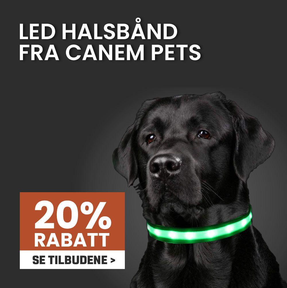 Canem LED halsbånd