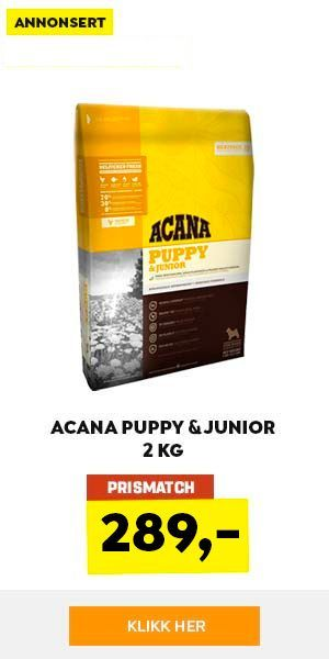 acana-dog-puppy